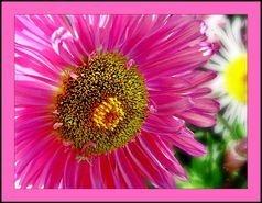Aquilea Centre Flor d'estiu