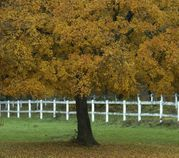 Scinto helps keep your trees and yards beautiful