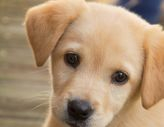 Puppy Beginner Dog Training Classes