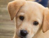 Puppy Beginner Dog Training Classes
