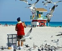 Man feeding birds on beach