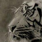 Pet Drawing, Wild Life Drawing