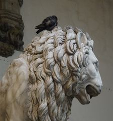 "womens tours.jpg alt=womens travel, marzocco lion with bird on his head , florence"">"