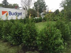 Thuja Green Giant grow fast, are deer resistant and handle heavy snow loads making them a favorite of Privacy hedges in the north.
