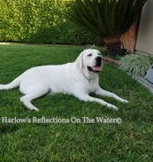 Harlow's Reflection on the Water
