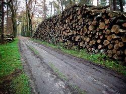 Mooie bossen in de streek van Sint-Amands