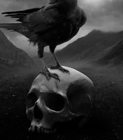 crow and skull macabre