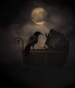 crow by dark shadows