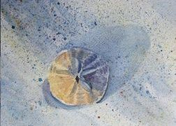 Sand Dollar Watercolor Painting Original Art by Tricia Granzier