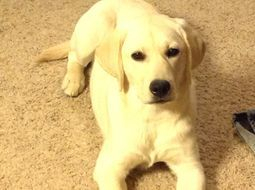 Alpha at 6 months