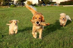 The Poop Squad Pet Waste Removal & Pet Sitting Services specializes in Pet sitter services, waste removal services, Doggy Services etc