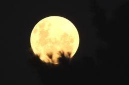 Circle the Moon