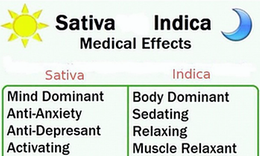 sativa weed for sale