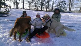 Family fun in the snow with our dogs.