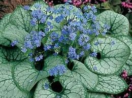 Perrenial we have many to choose from. Hosta, hydrangea, althea, and more