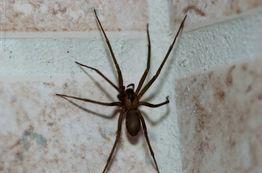 Spider forney