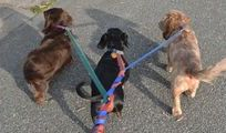 Dog walking, Dog playtime and Dog daycare