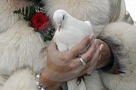 Dove symbolizes love