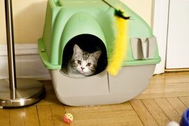 "Cleaning out your cat litter box and the surrounding litter box area. Initial charges may apply for litter boxes that require extensive or unusual cleaning on the first day of service. Time spent at the client house shouldn't exceed 30 minutes.""A Clean Litter Box is a Happy Cat House"""