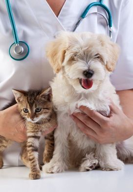 Take Pets to Veterinary