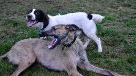 Friendly, reliable & flexible Dog Training & Dog Walking