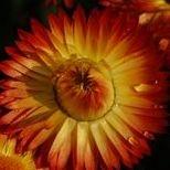 Natural Hypnosis Meditation Reiki Psychic Medium