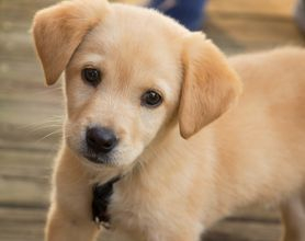 Our obedience training course can help train your pup and teach them the basic commands.