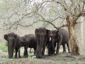 An amazing Animal family