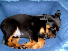 Windy River Ranch Rottweilers Puppy Care Tips