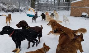 Large dog daycare outside in the snow.