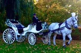 Weddings - Parties - Proms - Sweet Sixteens - Church Events - Reunions - Parades - Hay Rides - Tree Lightings - Christmas Rides - Country Carriage Rides