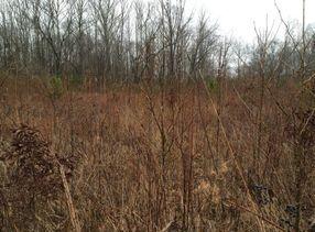 beech river wetland mitigation final