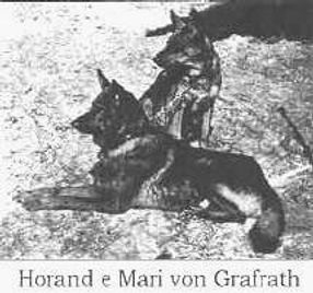 Horand One of the first Germ Shepherd Dogs