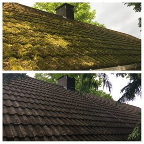Moss and algae removal and treatment