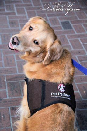 ParkerPup therapy dog vest Pet Partners