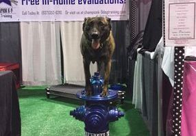 dog on fire hydrant