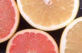 fresh citrus antioxident