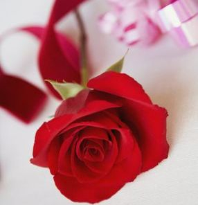 Roses, Lillies, Fresh Cut Flowers.