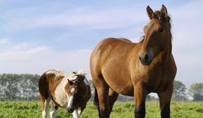 Barnyard Pet & Equestrian Supplies based in the heart of Cheshire, CW9 6AA