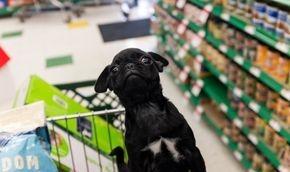 Never shop for Pet Supplies again