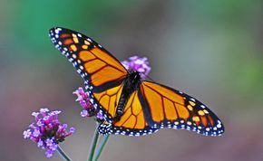 Free as a butterfly: Mental Health, Self Growth, Wellness