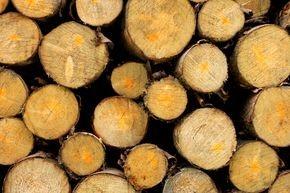 Nachhaltigkeit mit Holz