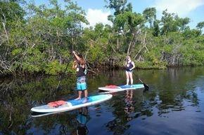 Paddleboard mangrove eco tour
