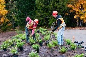 Proper planting techniques.