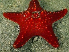 star fish, greek2m, so greek to me
