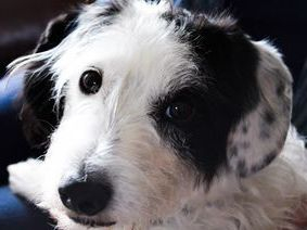 How a dog is perceived by another will influence how they respond and communicate