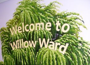 willow tree mural hand painted childrens ward hospital flowers blossom