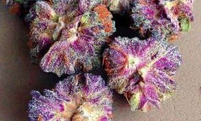 Strain Name: Purple Erkle Grade: A