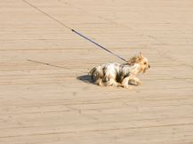 lead training is essential for a well behaved, social and comfortable walk for owner and dog