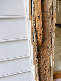 Termites working on a piece of wood